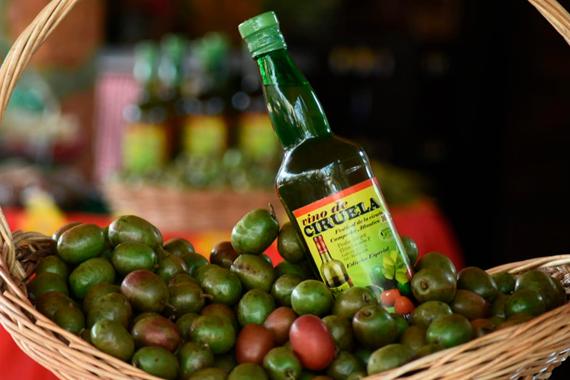 Con 'Ciruelatón', Gobernación les da la mano a productores de Campeche
