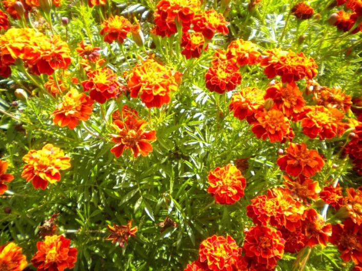 Coloridas flores crecen en el huertillo. (Foto: Pablo Harvey).