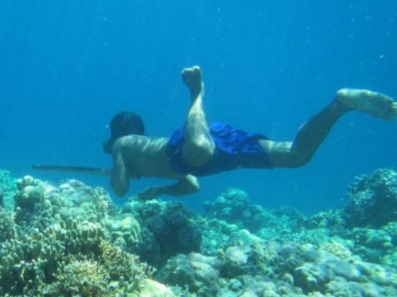 Selezione naturale osservata in popolo del sud-est asiatico: milza più grande per pescare in apnea