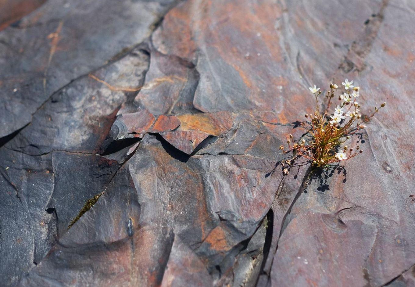shungite di due miliardi di anni, un tipo di roccia sedimentaria-1280×720