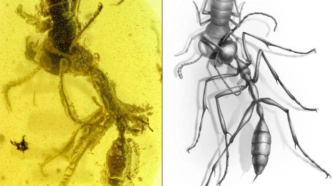 Questa formica 100 milioni di anni fa attaccò un insetto ma gli andò male