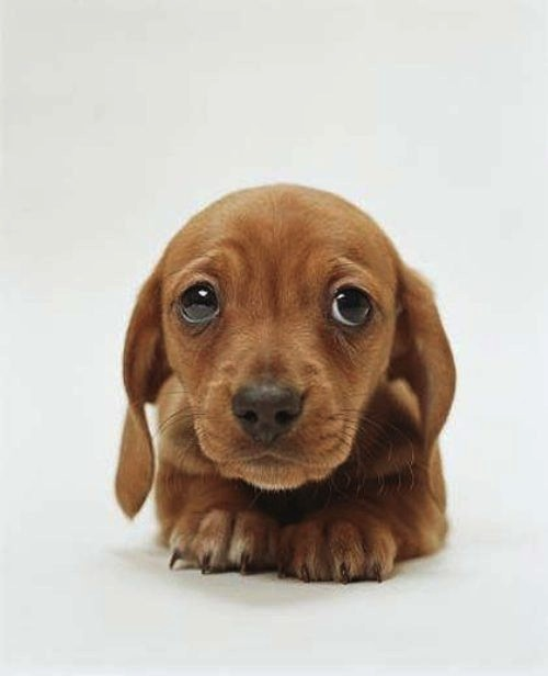 Image of a scared looking puppy