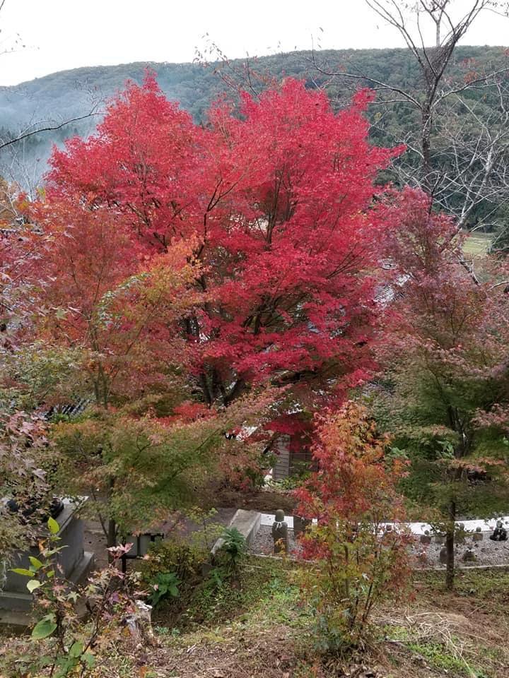 あじさい寺として有名な平等寺の「十三仏諸尊」春は桜、秋は紅葉の見どころ【能登町】