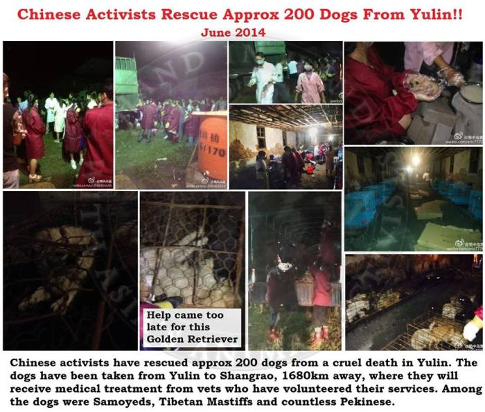 Breaking News from Hand in Hand with Asias Animal Activists - Dogs Rescued from Yulin!