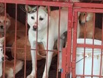 Breaking: South Korea President Moon Declares It May Be Time to Say NoToDogMeat