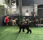 Adopt China Chinese Dog Meat Trade NoToDogMeat 01