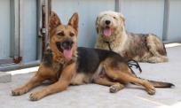 Adopt China Chinese Dog Meat Trade NoToDogMeat 04