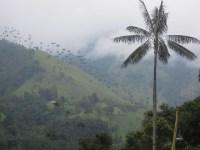n_Salento and Cocora Valley (91)