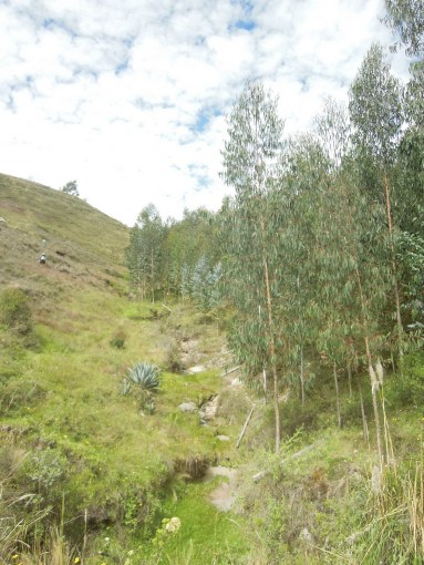 Cajamarca (45)