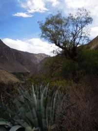 Colca kanion_on the way (10)