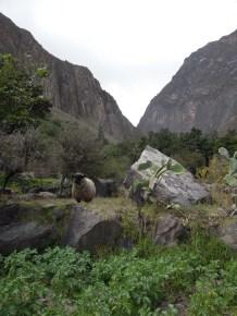 Colca kanion_on the way (9)