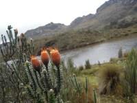 Parque Nacional Cajas (21)