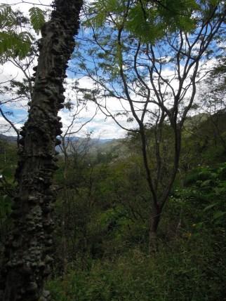Vilcabamba (4)