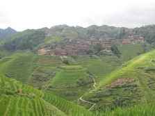 Longji - Dashai Village - Rice Fields (172)