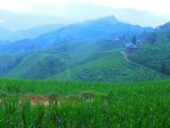 Longji - Dashai Village - Rice Fields (60)