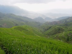 Longji - Dashai Village - Rice Fields (88)