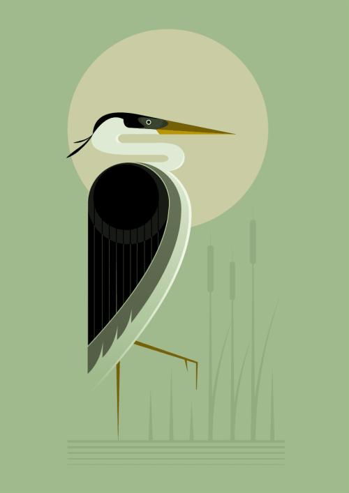 Heron in the reeds