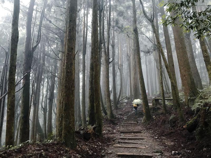 特富野古道森林