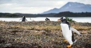 Dampak Update Penguin Terbaru