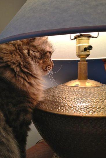 More lamp-napping