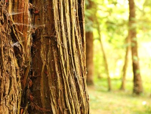 arbre arboretum national des barres