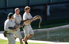 Huge Python!