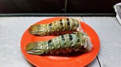 Painted Cray tails for dinner - not bad for bush camping!
