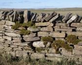 Mossy stone dyke
