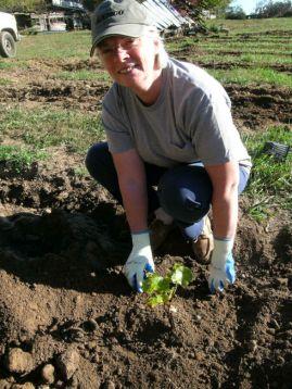 Vineyards - Murphy, NC - #22