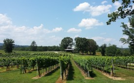 Vineyards - Murphy, NC - #29