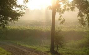 Vineyards - Murphy, NC - #10