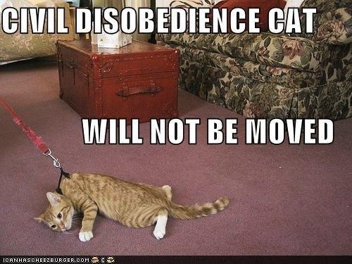 Kim Davis and Civil Disobedience