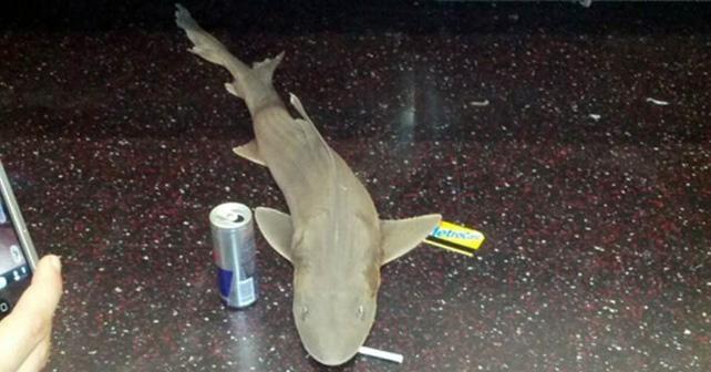 tiburon en el metro