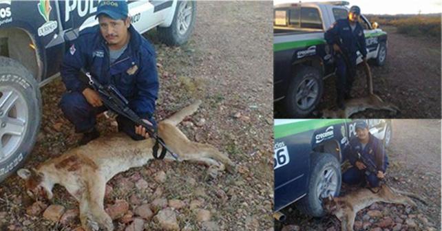 policia mata puma
