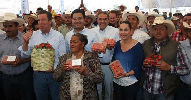mercado-fresas