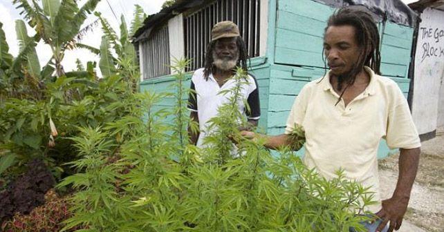mariguana legalizada