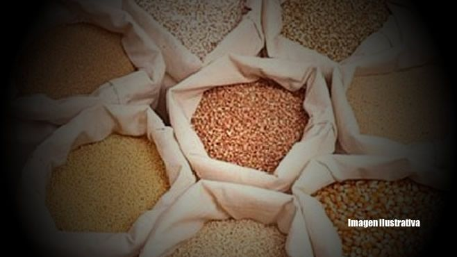 granos-semillas-panda