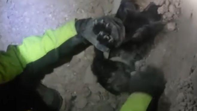 perro-sismo-italia-recate
