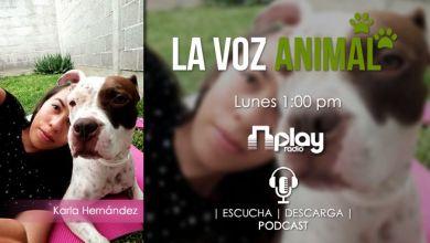 Photo of Maltrato animal (La Voz Animal – Podcast 2)