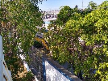 árboles_2 (Personalizado)