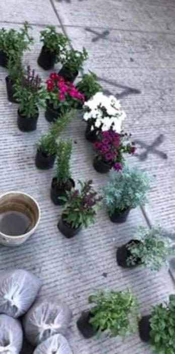 vendedor de plantas