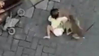 Photo of Mono «diabólico» llegó en moto e intentó secuestrar a una niña