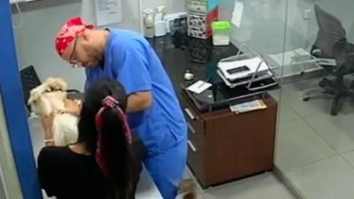 Photo of Gato rasguña a veterinario al ver sufrimiento de perrito al ser vacunado