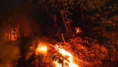 Photo of Incendio consume cuatro hectáreas en Sierra de Pénjamo