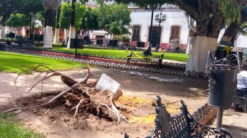 Árbol caído sobre silla de bolero. Foto Esaú González