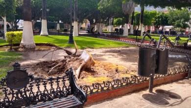 Photo of Árbol caído sobre silla de bolero y árboles secos talados en Abasolo