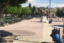 Photo of Se plantarán nuevos árboles en el jardín principal de Huanímaro