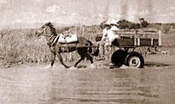 vida en el campo, Fotos juan López Luna y ADP. Fotos antiguas de Irapuato (5)