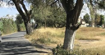 mezquites danados camino improvisado cibeles villas (4)