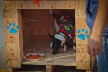 Casas para Perritos en Situación de Calle (3)